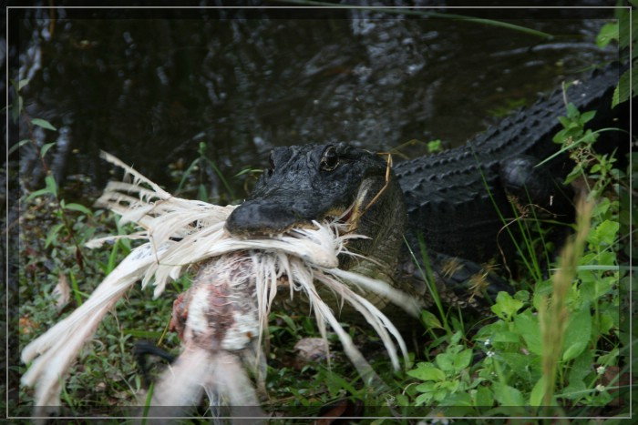 Gator County Tour