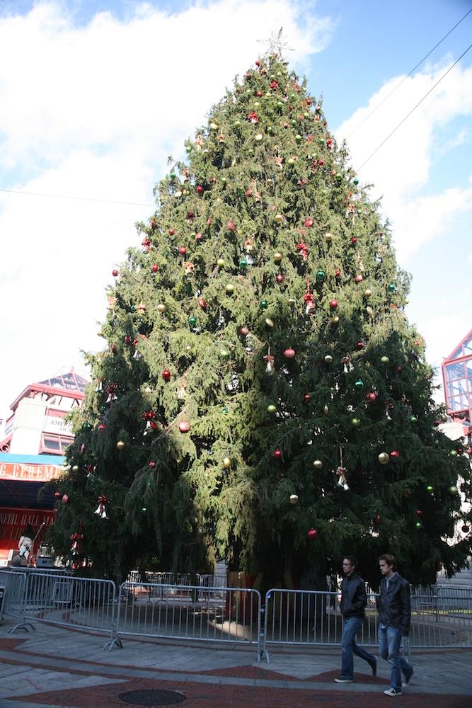 Weihnachtsbaum Boston